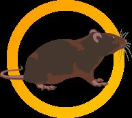 rágcsálóirtás egérirtás patkányirtás
